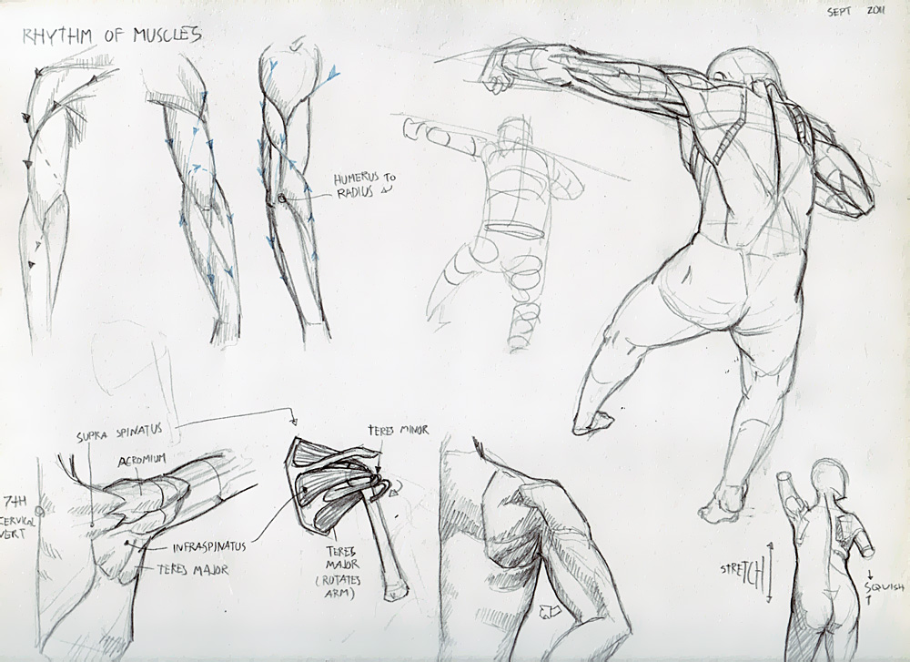 Skeletons and Arm Muscles! - Deiv Calviz - Illustrations, Concept ...