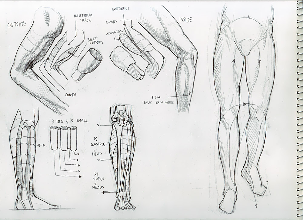 Done with leg and face muscles! - Deiv Calviz - Illustrations ...