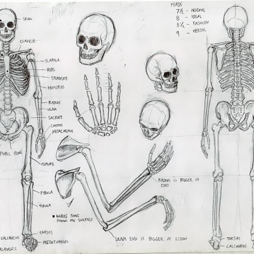 Anatomy Study 001