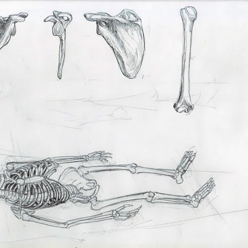 Anatomy Study 002