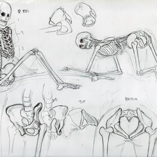 Anatomy Study 003