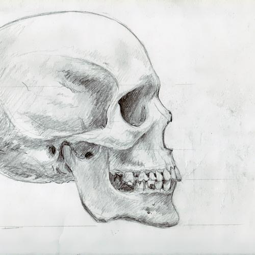 Anatomy Study 005