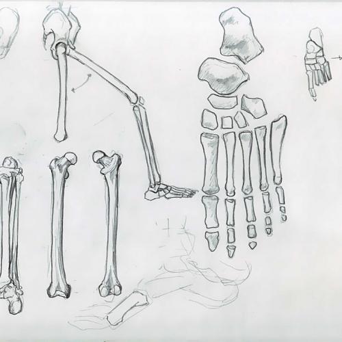Anatomy Study 006
