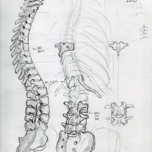 Anatomy Study 007