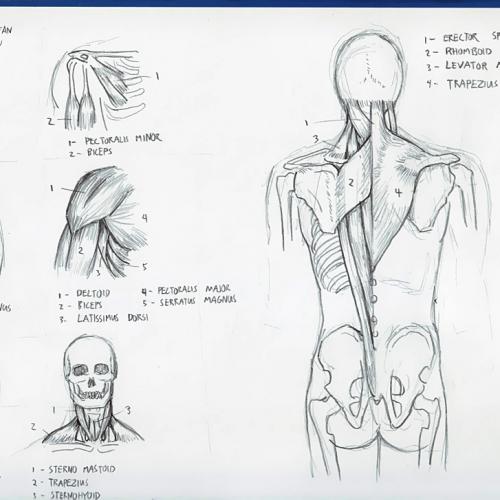 Anatomy Study 012