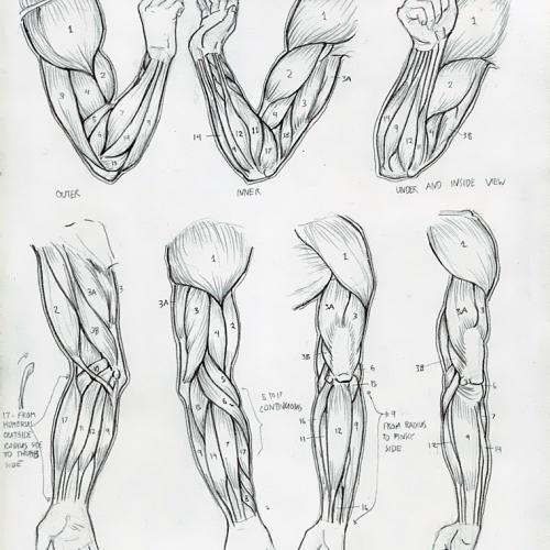 Anatomy Study 014