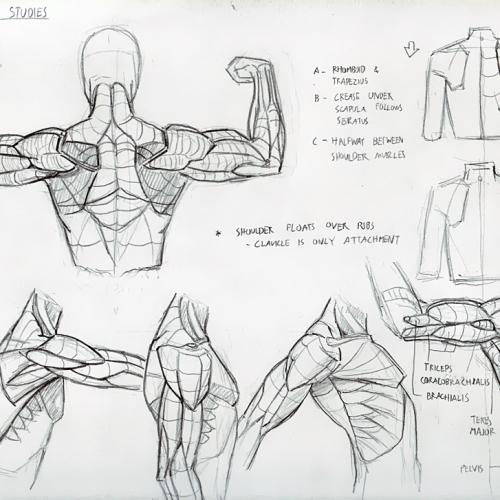Anatomy Study 015