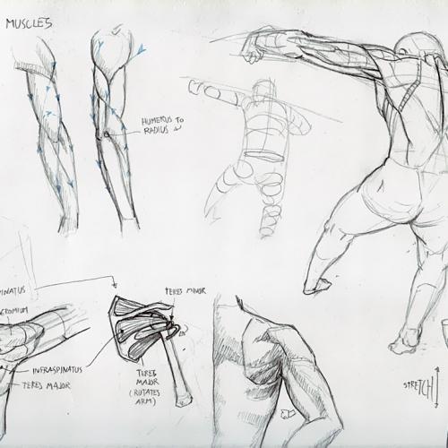 Anatomy Study 016
