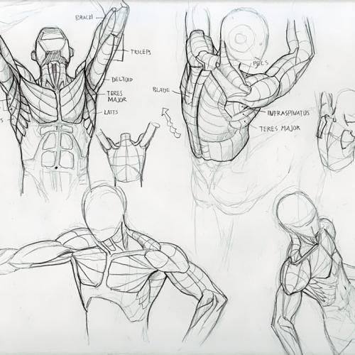 Anatomy Study 017