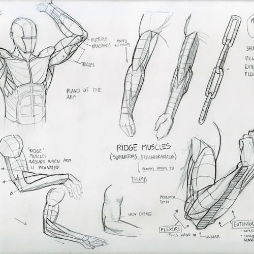 Anatomy Study 018