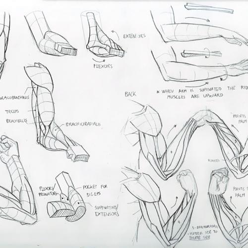 Anatomy Study 019