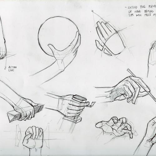 Anatomy Study 022