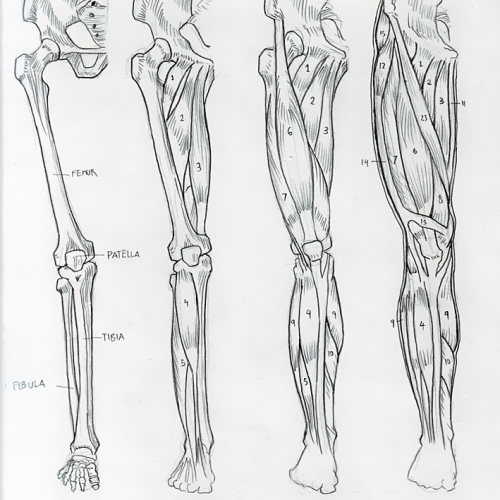 Anatomy Study 023