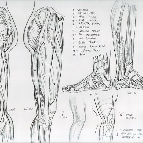 Anatomy Study 025
