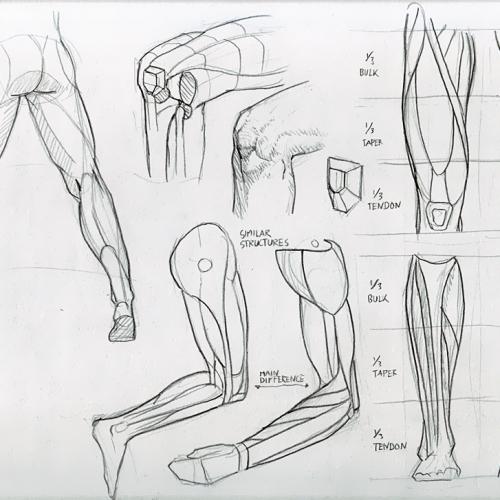 Anatomy Study 026