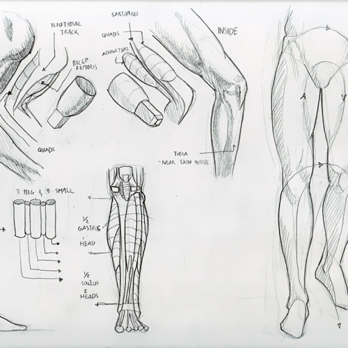 deiv_calviz_anatomy_027