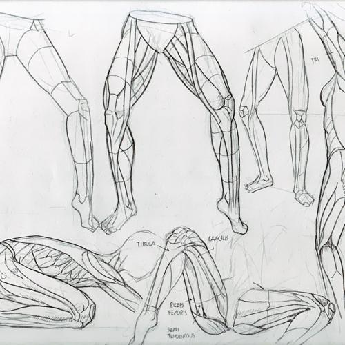 Anatomy Study 028