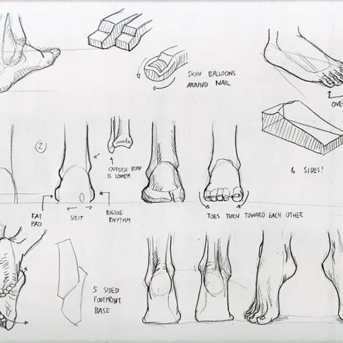 Anatomy Study 030