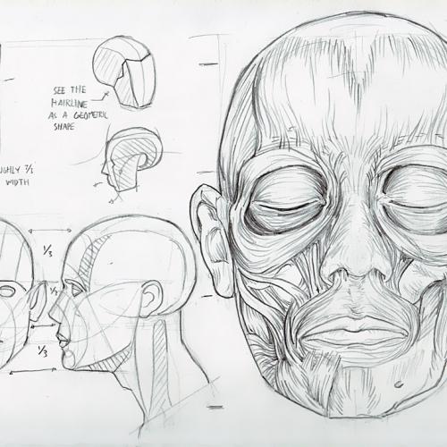 Anatomy Study 031