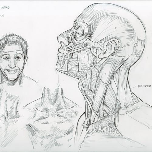 Anatomy Study 032