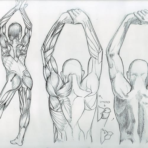 Anatomy Study 033