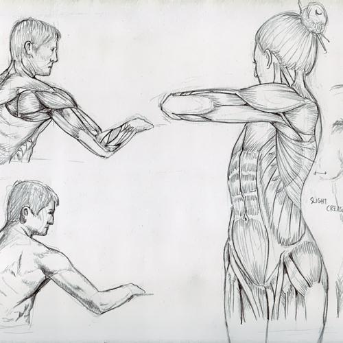 Anatomy Study 034